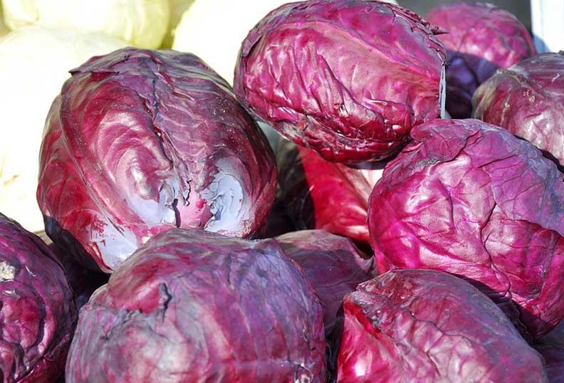 Aliments santé - Le chou rouge