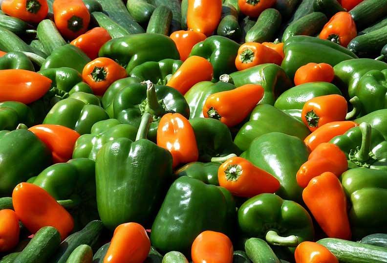 Légumes de toutes les couleurs pour la cuisine Paléo