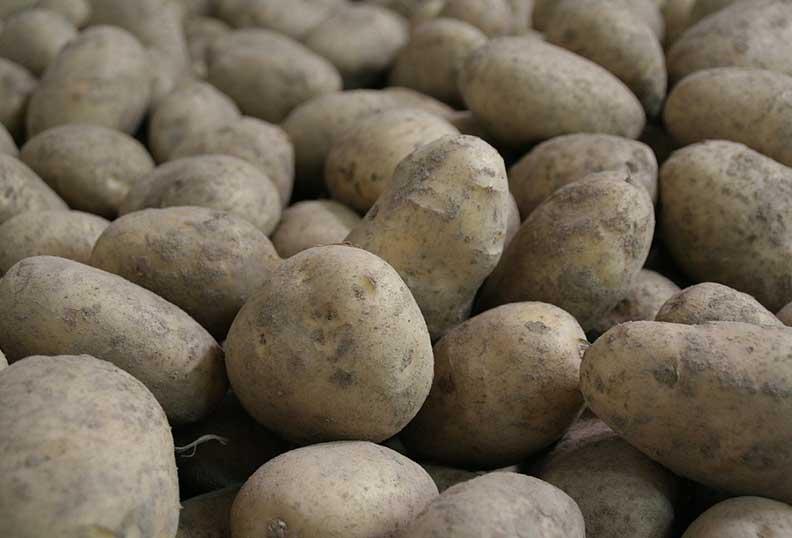Pomme de terre - aliment sans gluten et riche en sucre non raffiné