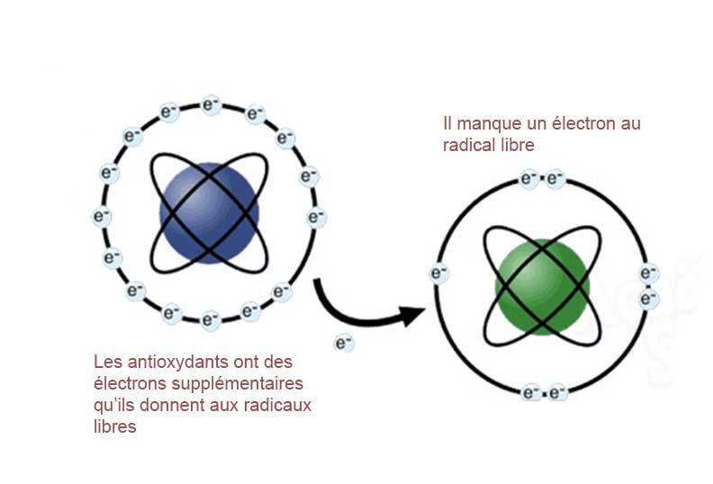Les radicaux libres ont un électron qui manque
