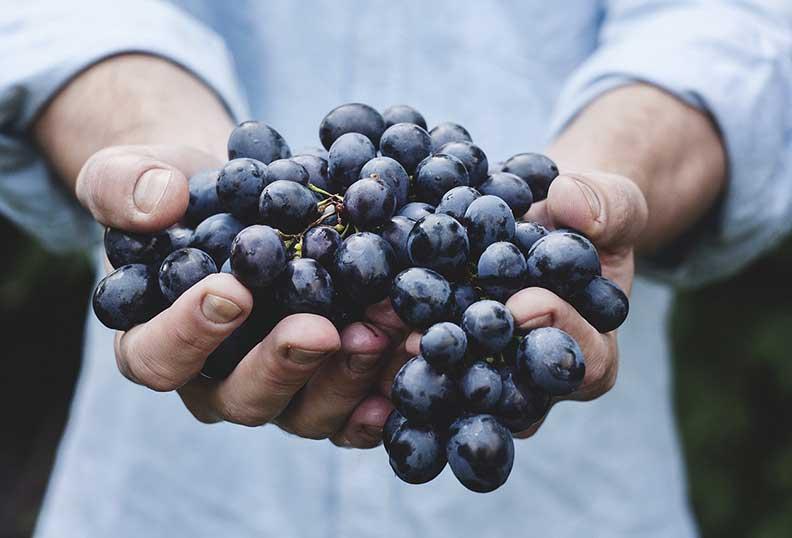 Des raisins rouges